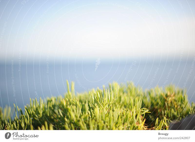 Leuchtend grünes Gras vor Meerpanorama am Horizont Natur Wasser schön Ferien & Urlaub & Reisen Sommer Strand ruhig Ferne Freiheit klein Küste Wellen Ausflug