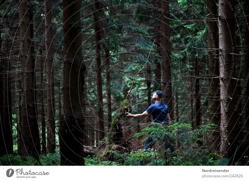 Kontakt Mensch Mann Natur Baum Pflanze Sommer Wald dunkel Traurigkeit Zusammensein Erwachsene Lifestyle T-Shirt beobachten Vertrauen außergewöhnlich