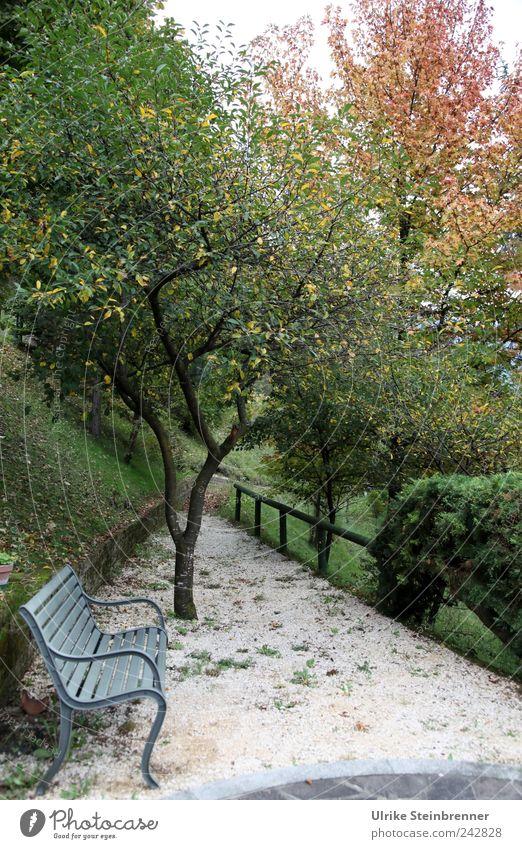 Herbstlich Erholung ruhig Meditation Ferien & Urlaub & Reisen Natur Pflanze schlechtes Wetter Baum Sträucher Garten Park sitzen stehen dehydrieren natürlich