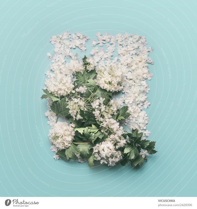 Weiße Blumen Composing on light blue Natur Sommer Pflanze weiß Blatt Hintergrundbild Blüte Frühling Feste & Feiern Stil Design Dekoration & Verzierung springen