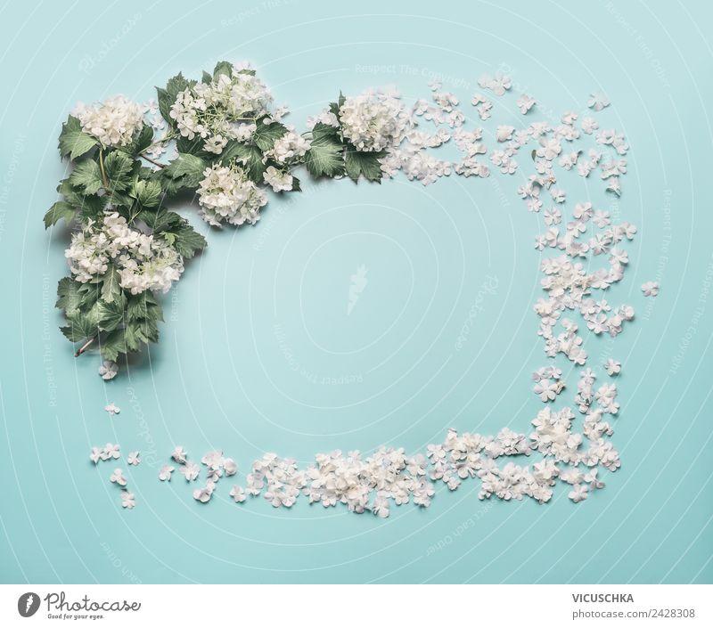 Weiße Blumen und Blütenblätter Rahmen auf hellblau Stil Design Sommer Dekoration & Verzierung Feste & Feiern Natur Pflanze Blatt Blumenstrauß Ornament Liebe