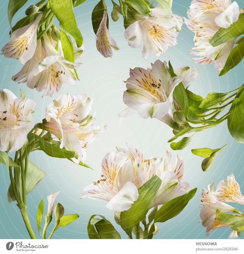 Floral Hintergund Pattern mit weißen Blumen Natur Sommer blau Pflanze schön Blatt Hintergrundbild Frühling Blüte Stil Garten Design Dekoration & Verzierung