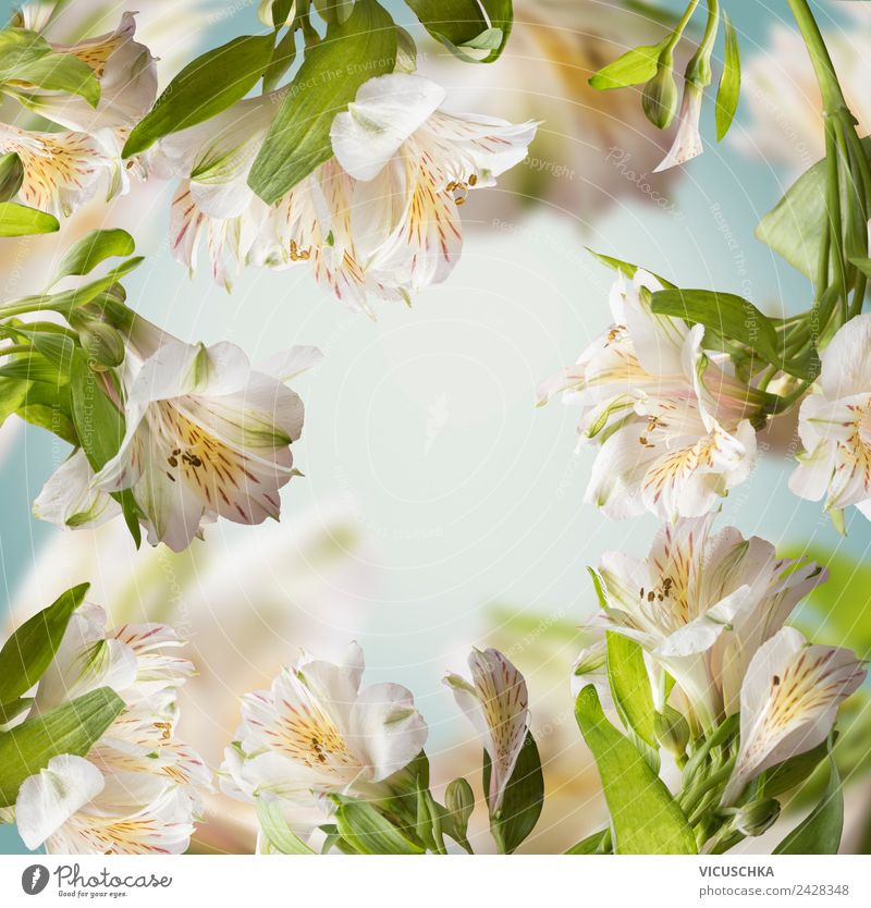 Blumen Hintergrund Rahmen Stil Design Sommer Garten Natur Pflanze Frühling Blatt Blüte Blumenstrauß gelb Hintergrundbild arrangiert weiß blau grün Farbfoto
