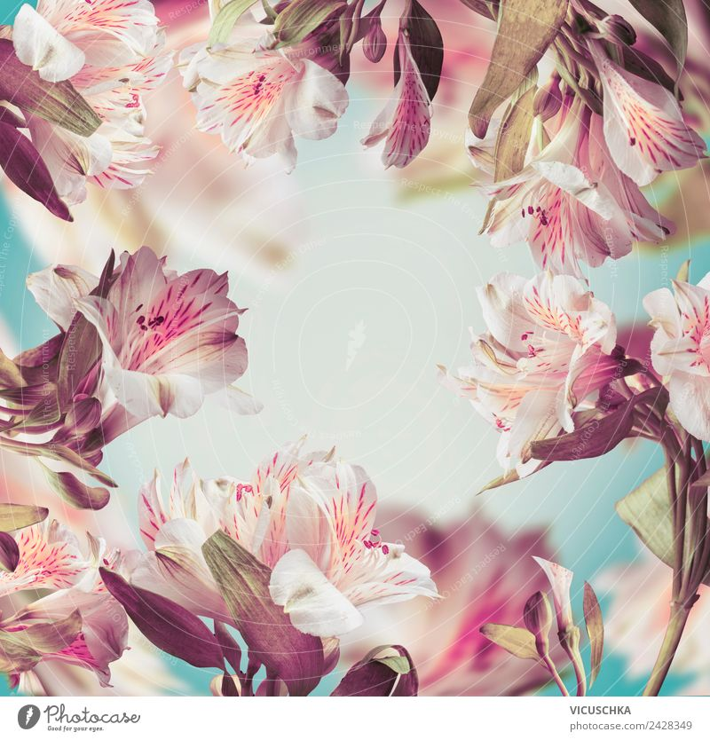 Schöne rosa Blumen Rahmen Natur Sommer Pflanze Hintergrundbild Stil Design Dekoration & Verzierung Blumenstrauß Ornament Pastellton