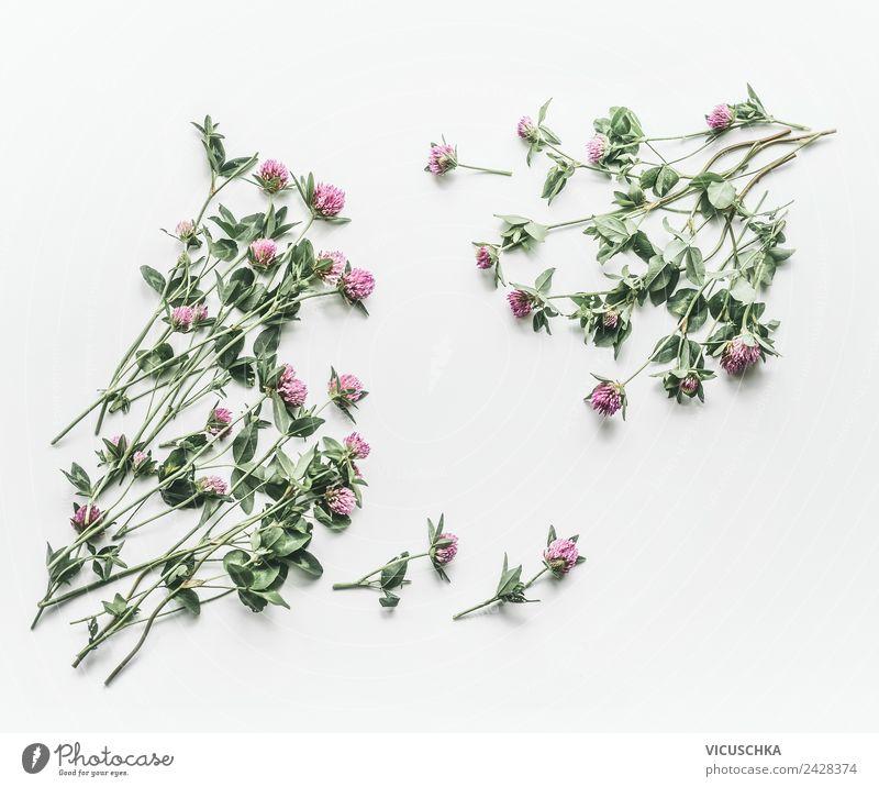 Klee Rahmen auf weißem Hintergrund Stil Design Gesundheit Alternativmedizin Sommer Natur Pflanze Blatt Blüte rosa Hintergrundbild Wildpflanze Kleeblatt