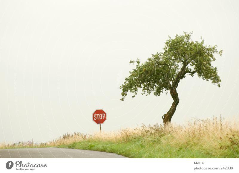 Bis hierher und nicht weiter Baum ruhig Einsamkeit Straße Wiese Landschaft Umwelt Schilder & Markierungen leer stoppen Zeichen Hinweisschild Verkehrswege