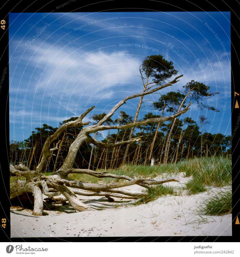 Weststrand Natur Baum Meer Pflanze Strand Wald Landschaft Küste Wind Umwelt Wachstum Wandel & Veränderung Klima Vergänglichkeit wild natürlich