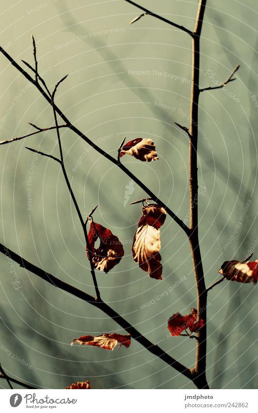Herbst Umwelt Pflanze Baum Sträucher Blatt Garten Park hängen dehydrieren natürlich trocken trösten standhaft Traurigkeit Erschöpfung Beginn Leben Natur Stress