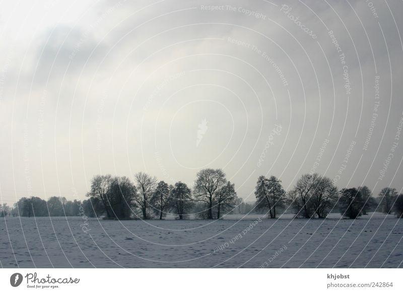 Sonne vs Hochnebel Natur Himmel Baum Winter Wolken kalt Schnee grau Landschaft Eis Feld Nebel Frost schlechtes Wetter Wolkendecke