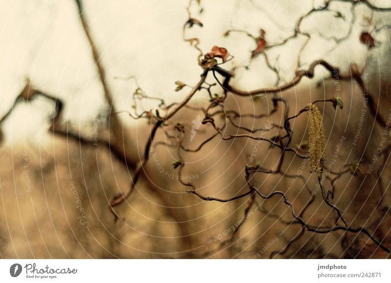 Korkenzieher Umwelt Natur Landschaft Pflanze Baum Sträucher Garten Park Wiese alt hängen Wachstum trist trocken Traurigkeit Sorge Trauer Beginn Einsamkeit Ende