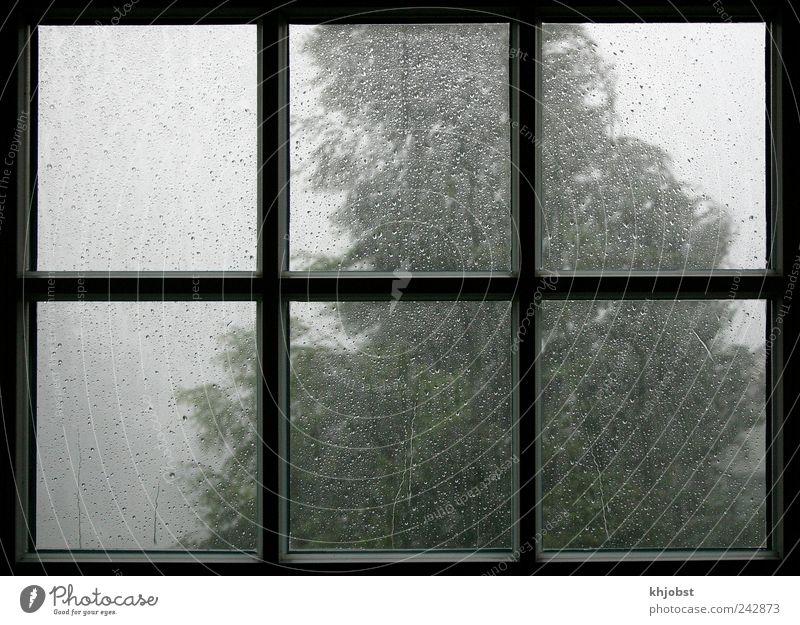 Sommer 2011 Natur Wasser Wassertropfen Klima Wetter Unwetter Sturm Regen Gewitter Baum Fenster dunkel nass grau schwarz Endzeitstimmung Gewitterregen