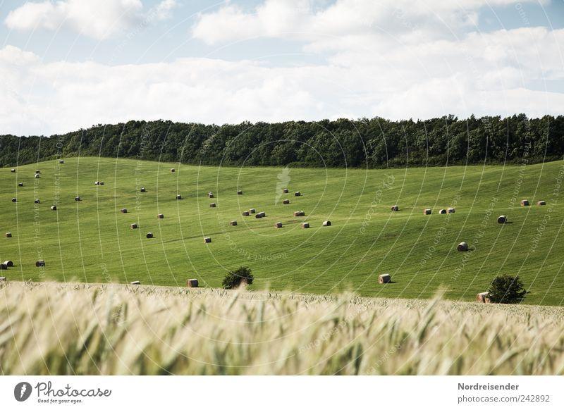 Schichten Natur Himmel Pflanze Sommer Ernährung Wald Wiese Landschaft Feld wandern Wetter ästhetisch Niveau Klima Getreide Idylle