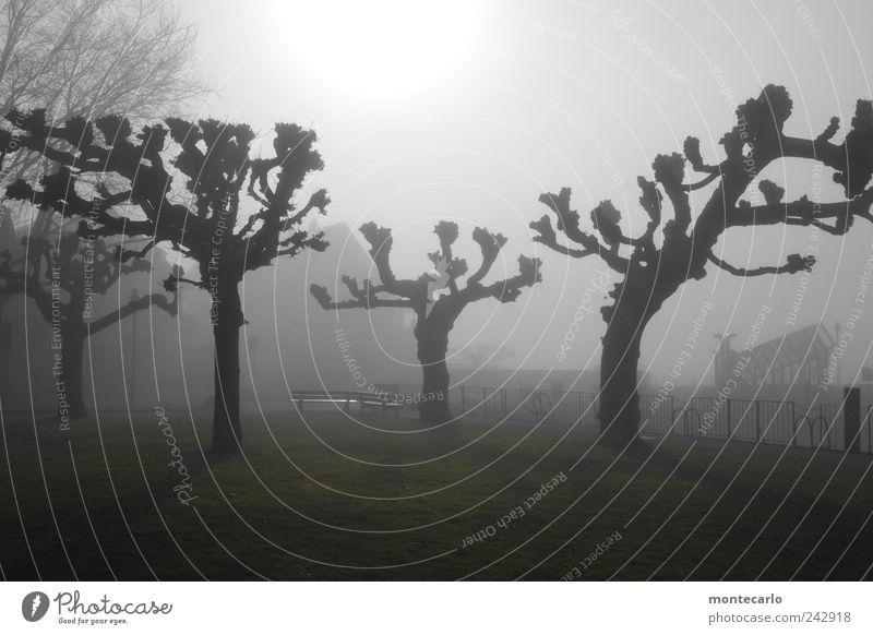 "Vor dem ""Sommer"" Natur Himmel Baum Sonne Pflanze Winter dunkel See Stimmung Nebel Seeufer Platane"