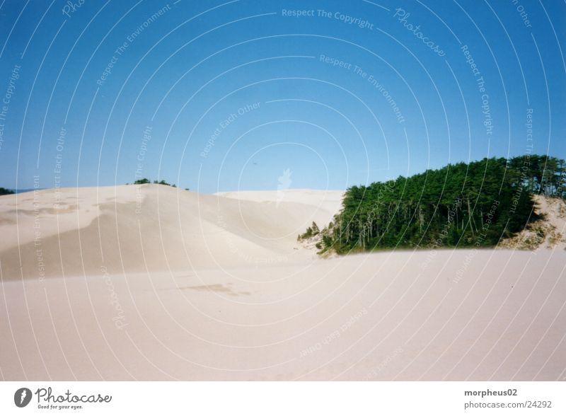 Wüste Strand Wald Sand Wind Wüste Stranddüne