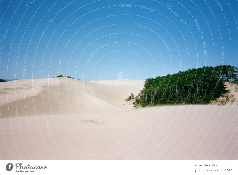 Wüste Strand Wald Sand Wind Stranddüne