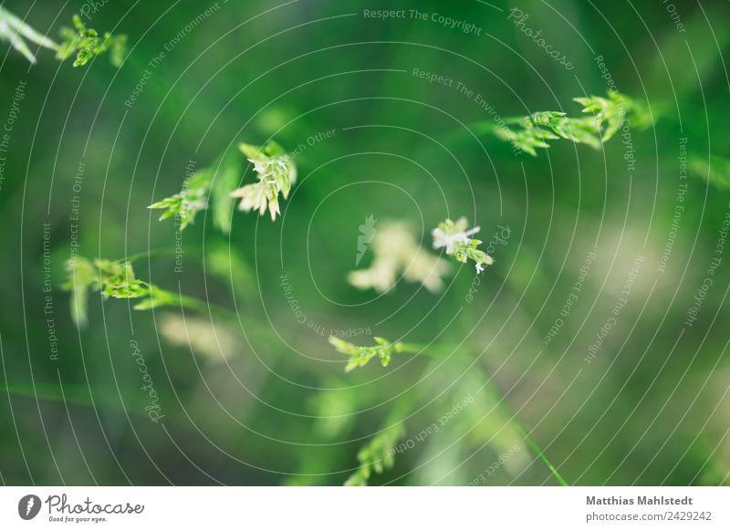 Grass von oben Umwelt Natur Pflanze natürlich grün Frühlingsgefühle Zufriedenheit nachhaltig ruhig Farbfoto Gedeckte Farben Außenaufnahme Nahaufnahme