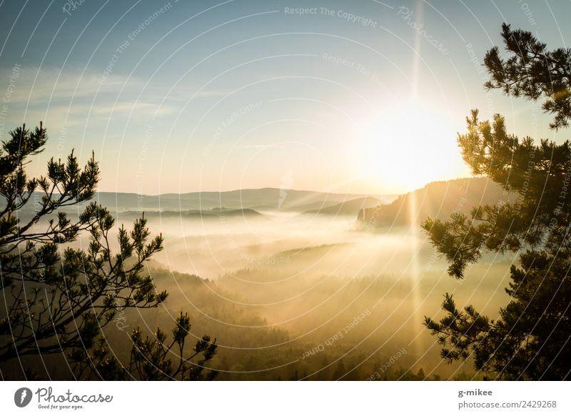 Sonnenaufgang in den Bergen Natur Landschaft Nebel Wald Berge u. Gebirge Elbsandsteingebirge Erholung wandern hell Wärme blau gelb gold Warmherzigkeit ruhig