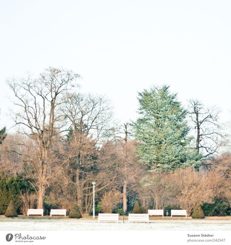 Großer Garten Baum Wiese Herbst Park Eis Ordnung trist Frost Dresden Laterne Schönes Wetter kahl Aufenthalt Raureif Parkbank Möbel