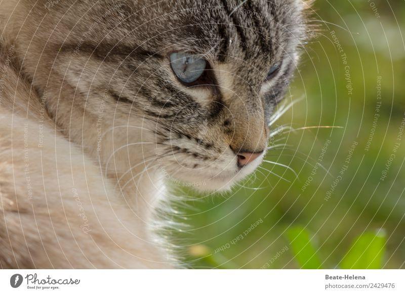 Vor dem Katzensprung Natur Sommer blau schön grün Umwelt Gras Stimmung träumen elegant ästhetisch Kraft Abenteuer warten beobachten
