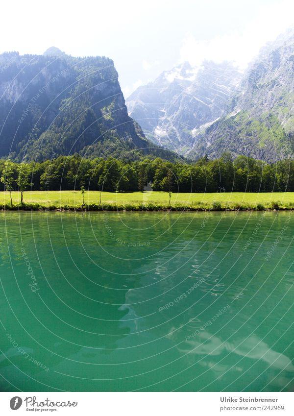 Water Green Ferien & Urlaub & Reisen Tourismus Ausflug Sommer Berge u. Gebirge Königssee Berchtesgaden Bayern Natur Landschaft Pflanze Wasser Schönes Wetter