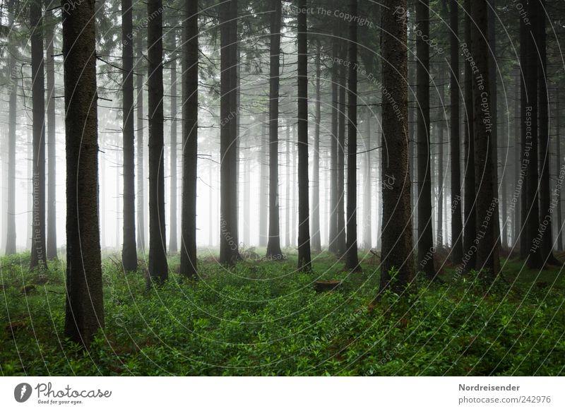 Wald Natur Landschaft Pflanze Luft Sommer Herbst Klima Wetter schlechtes Wetter Nebel Baum beobachten bedrohlich dunkel gruselig Angst Einsamkeit Stimmung