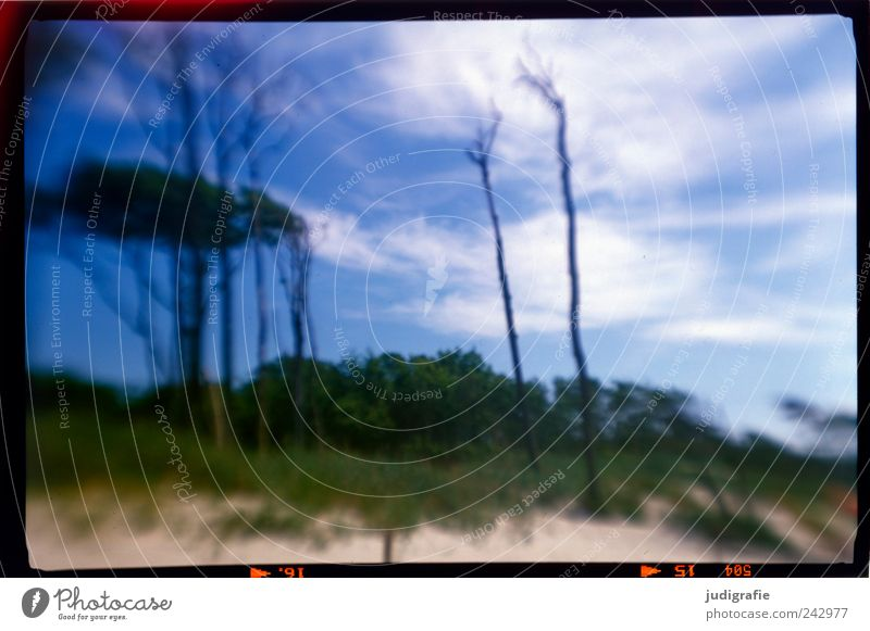 Weststrand Umwelt Natur Landschaft Pflanze Himmel Baum Küste Strand Ostsee Darß außergewöhnlich natürlich wild Stimmung träumen Vergänglichkeit
