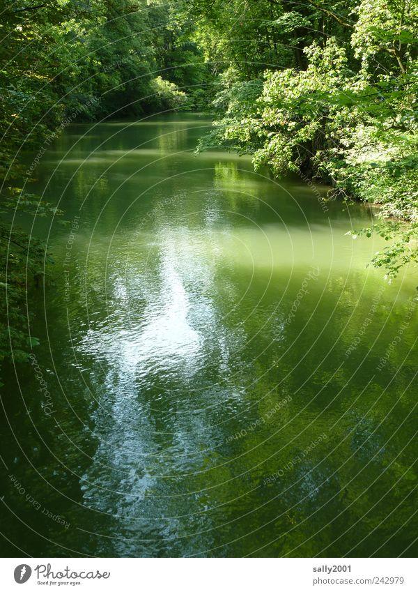 An der schönen grünen Isar Natur schön Baum grün Pflanze Sommer ruhig Einsamkeit Ferne Farbe kalt Erholung Freiheit Landschaft Zufriedenheit Umwelt