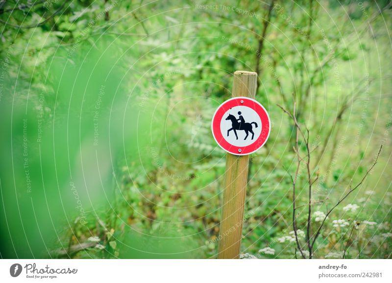 Reiten verboten! Natur grün rot Sommer Blatt Tier Wald Sport Park Schilder & Markierungen Sträucher Pferd Zeichen Stock Verbote Ponys