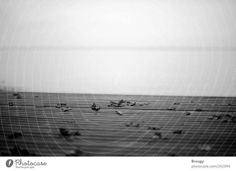 Herbstlaub auf einem Steg, das andere Seeufer am Horizont Natur Wasser Strand Blatt ruhig Einsamkeit Ferne Erholung dunkel Holz Stil Traurigkeit Stimmung See braun warten