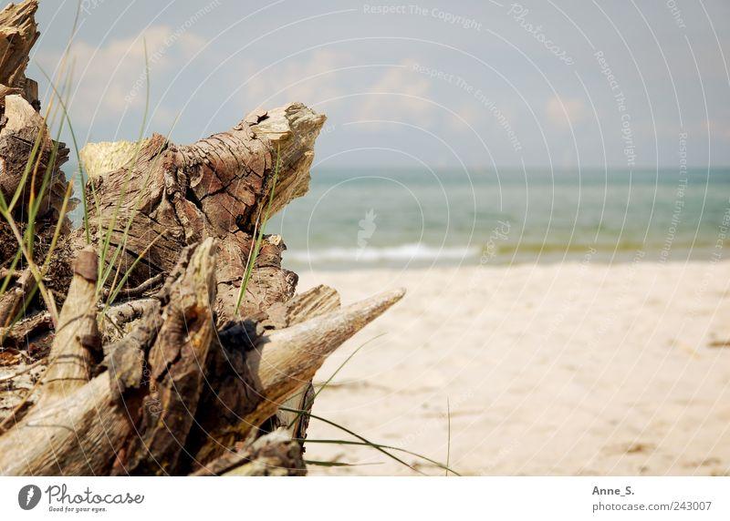 Strandgut Natur Baum Pflanze Sommer Ferien & Urlaub & Reisen Strand Meer ruhig Erholung Umwelt Holz Gras Sand Küste Ausflug Schwimmen & Baden