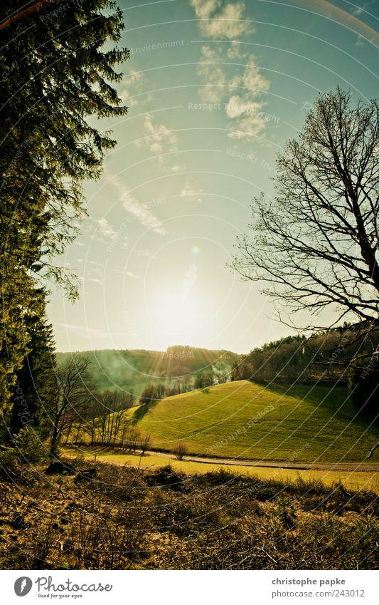 Hinter den sieben/siegener Bergen Natur schön Sommer Ferne Wald Straße Wiese Umwelt Landschaft Wärme Wege & Pfade Ausflug natürlich Perspektive Hügel heiß