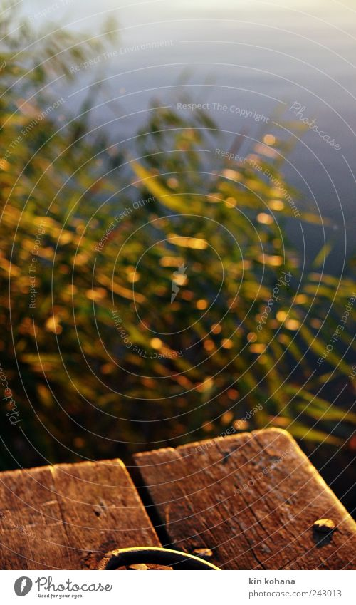 sommersehnsucht Natur Wasser blau Pflanze Sommer Meer gelb Erholung Holz Traurigkeit Küste träumen braun gold frei Brücke