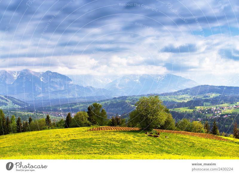 Himmel Natur Ferien & Urlaub & Reisen Sommer blau grün Landschaft Baum Blume Tier Wolken Ferne Wald Berge u. Gebirge gelb Frühling