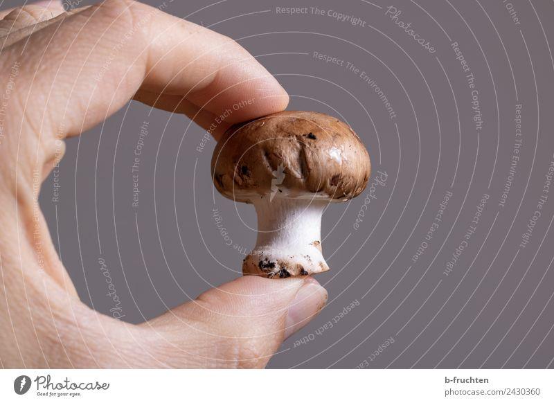 Champignon Lebensmittel Bioprodukte Gesunde Ernährung Essen Mann Erwachsene Hand Finger berühren festhalten frisch braun Champignons Pilz züchten Ernte