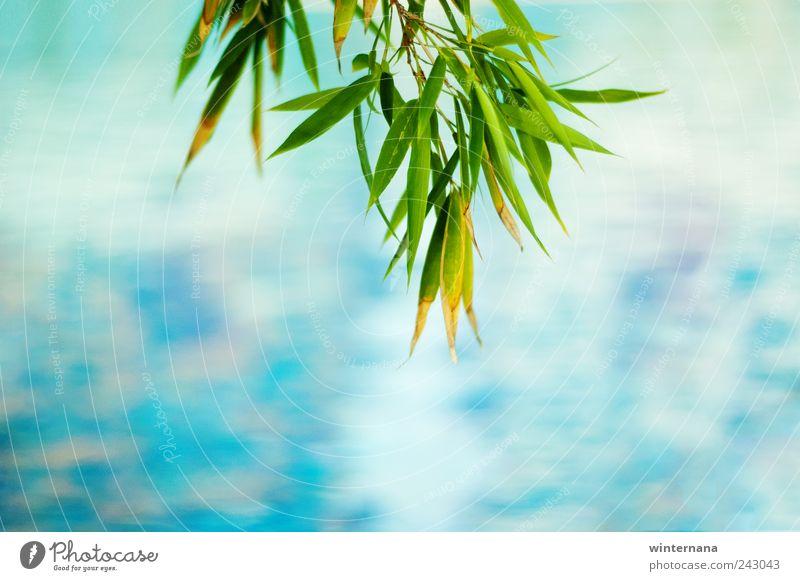 Grün mit Blau Umwelt Natur Wasser Pflanze Gefühle Freude Glück Fröhlichkeit Begeisterung Coolness Optimismus Kraft Willensstärke Macht Tatkraft Leidenschaft