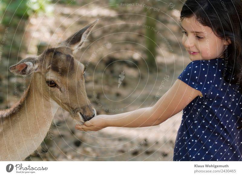 Kinderfreude. Mädchen füttert einen Damhirsch Picknick Freude Haare & Frisuren Haut Gesicht Kindheit Kopf Arme Hand 1 Mensch 3-8 Jahre Zoo Frühling Sommer