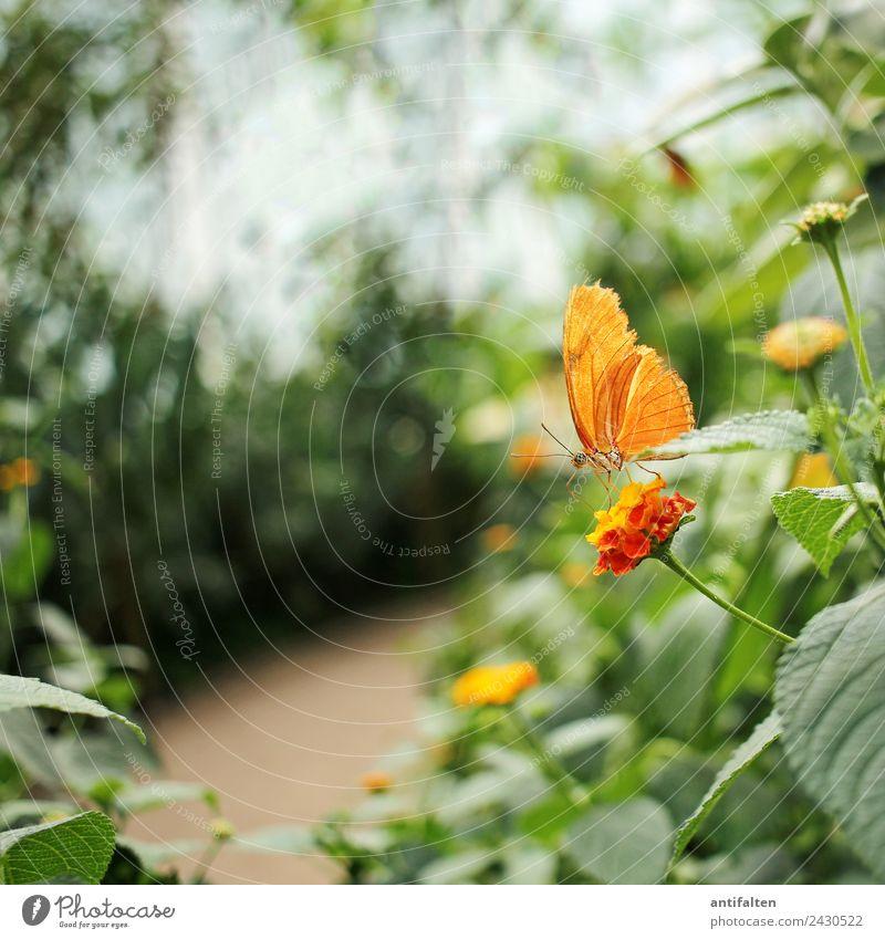 für inkje: just a little orange butterfly :-) Freizeit & Hobby Ferien & Urlaub & Reisen Tourismus Ausflug Freiheit Sommer Natur Pflanze Frühling Schönes Wetter