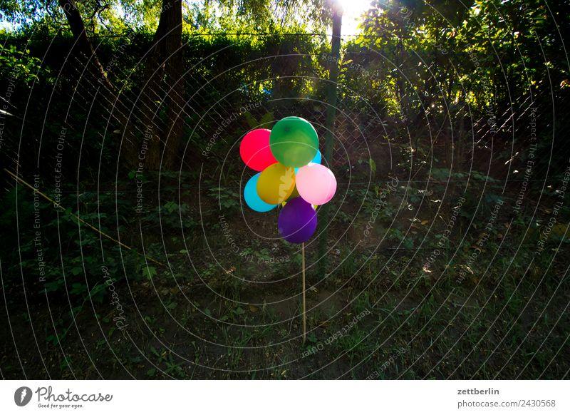 Party Luftballon Feste & Feiern Garten Gartenfest Menschenleer Natur Schrebergarten Sommer Dekoration & Verzierung Kindergeburtstag Geburtstag Textfreiraum