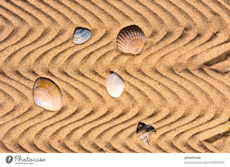 Shells in the Sand Ferien & Urlaub & Reisen Sommer Erholung ruhig Freude Strand Wärme Hintergrundbild Freizeit & Hobby Wellen Warmherzigkeit Streifen Wellness