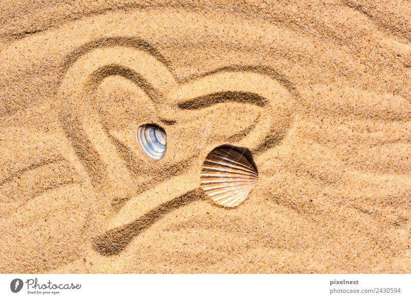Heart in the Sand Freude Sommer Sommerurlaub Strand Wärme Muschel Zeichen Herz Erholung Liebe maritim Gefühle Freizeit & Hobby Freundschaft