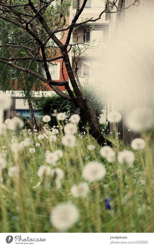 Pusteblumen Umwelt Natur Landschaft Pflanze Baum Blume Gras Blüte Grünpflanze Garten Park Blühend ästhetisch natürlich rund Freude Glück Fröhlichkeit