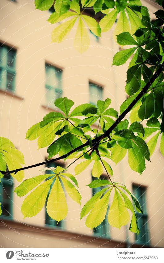 Kastanie Natur Baum Pflanze Sommer Freude ruhig Haus Fenster Umwelt Garten Glück Frühling Park Zufriedenheit Fassade Ausflug