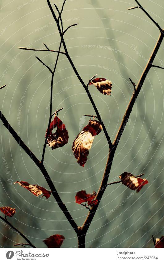 Herbstlaub Natur alt Baum Pflanze ruhig Blatt Wiese Herbst Garten Traurigkeit Park Landschaft Umwelt frei Beginn Ausflug