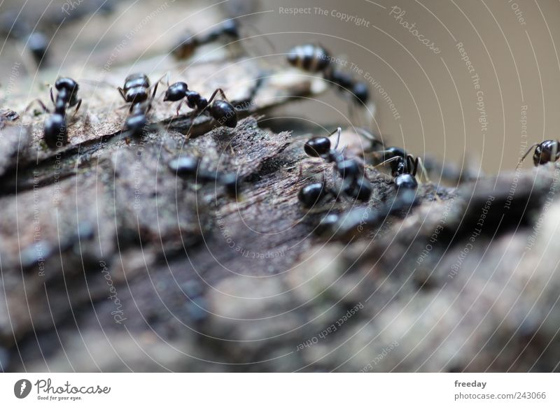 400 Arbeiten ;) Natur Baum Sommer Tier Umwelt Straße grau klein Erde Luft Arbeit & Erwerbstätigkeit laufen einzigartig Team fantastisch Insekt