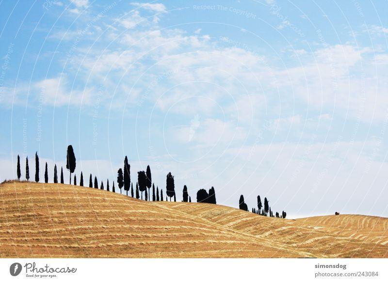 baumwanderung Himmel Baum Ferien & Urlaub & Reisen Ferne gelb Erholung Freiheit Landschaft Feld wandern elegant Horizont Ordnung Wachstum Wandel & Veränderung