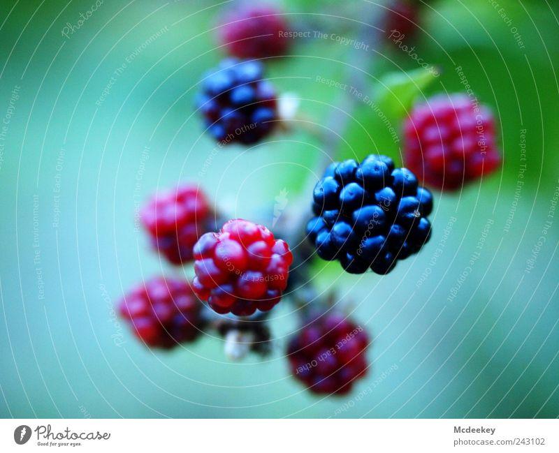 black bear Natur weiß grün blau Pflanze rot Sommer Blatt schwarz Wiese grau Feld rosa Frucht frisch süß