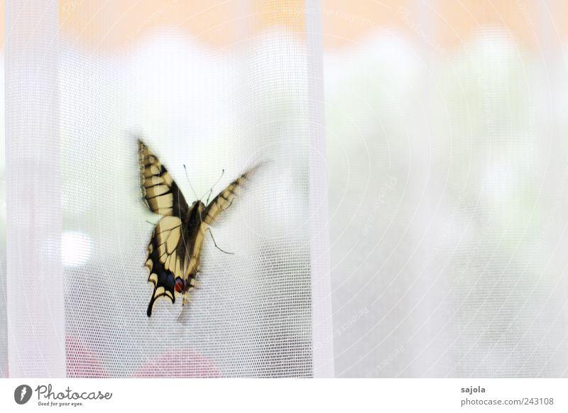 kurz vor dem abflug Tier Schmetterling Schwalbenschwanz 1 ästhetisch flattern Beginn Ferien & Urlaub & Reisen Abheben Markise Vorhang Gardine Farbfoto
