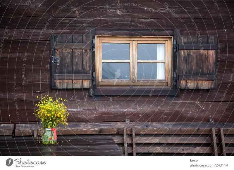 Almfoto I alt Blume Sommer Ferien & Urlaub & Reisen gelb kalt Wand Fenster Berge u. Gebirge Holz Mauer Zufriedenheit braun wandern Glas nass