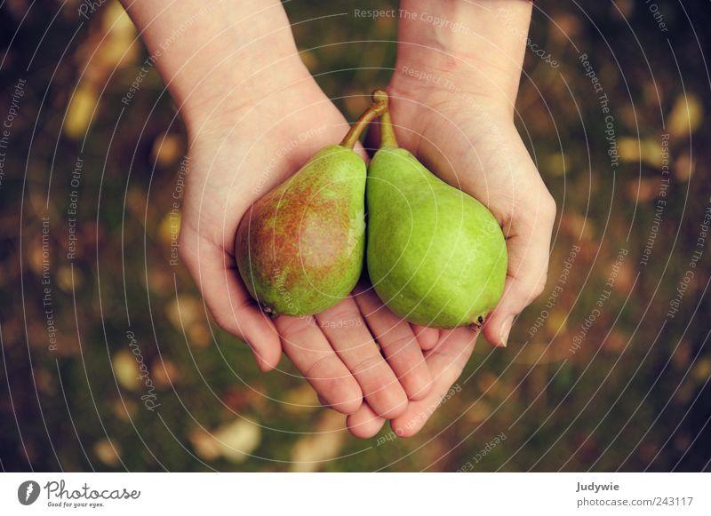 Unterm Birnbaum Natur Hand grün Sommer Umwelt Wiese Ernährung Herbst Leben Lebensmittel Garten Glück Gesundheit Zufriedenheit Frucht natürlich