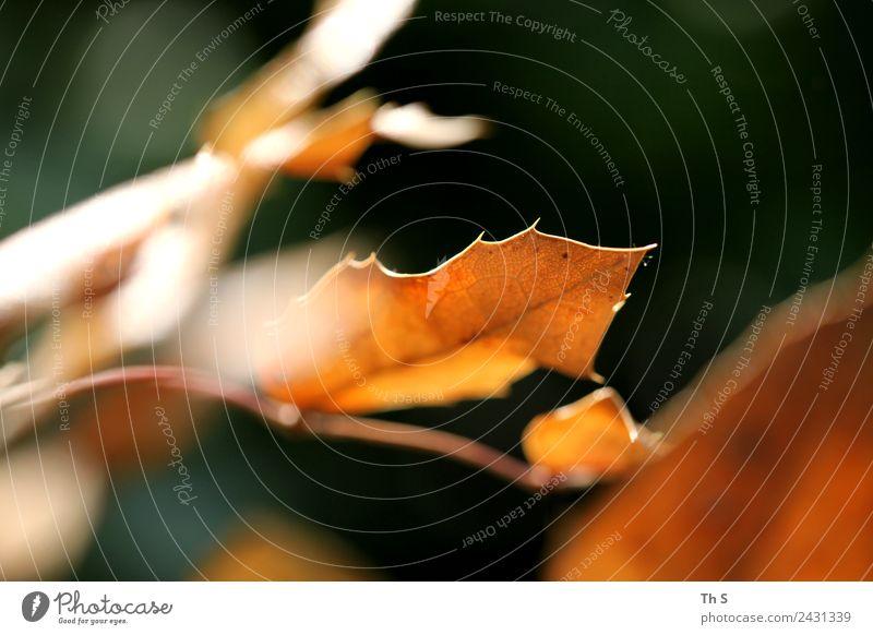 Blatt Natur Sommer Pflanze grün ruhig Herbst Frühling natürlich Bewegung orange braun elegant frisch ästhetisch authentisch